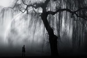 Embrace The Solitude